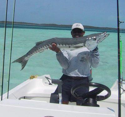Barracuda Los ROques